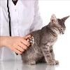 Ветеринарные клиники в Сеймчане